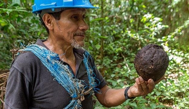 Масло бразильского ореха из Перу